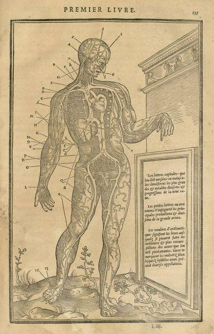 La dissection des parties du corps humain, p.135, Veines, artères, coeur et foie