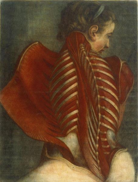 GautierD'Agoty_AnatomyOfAWoman'sSpine
