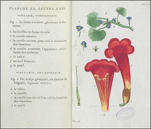 Planche XX du Recueil de plantes coloriées, gravée par Jean Aubry, avec page de légendes en regard