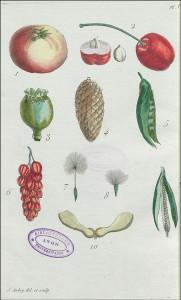 Planche V du Dictionnaire des termes de botanique dans le Recueil de plantes coloriées, gravée par Jean Aubry
