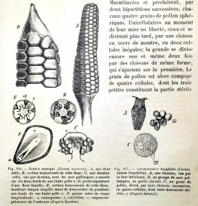 Fig.956 Zamier muriqué