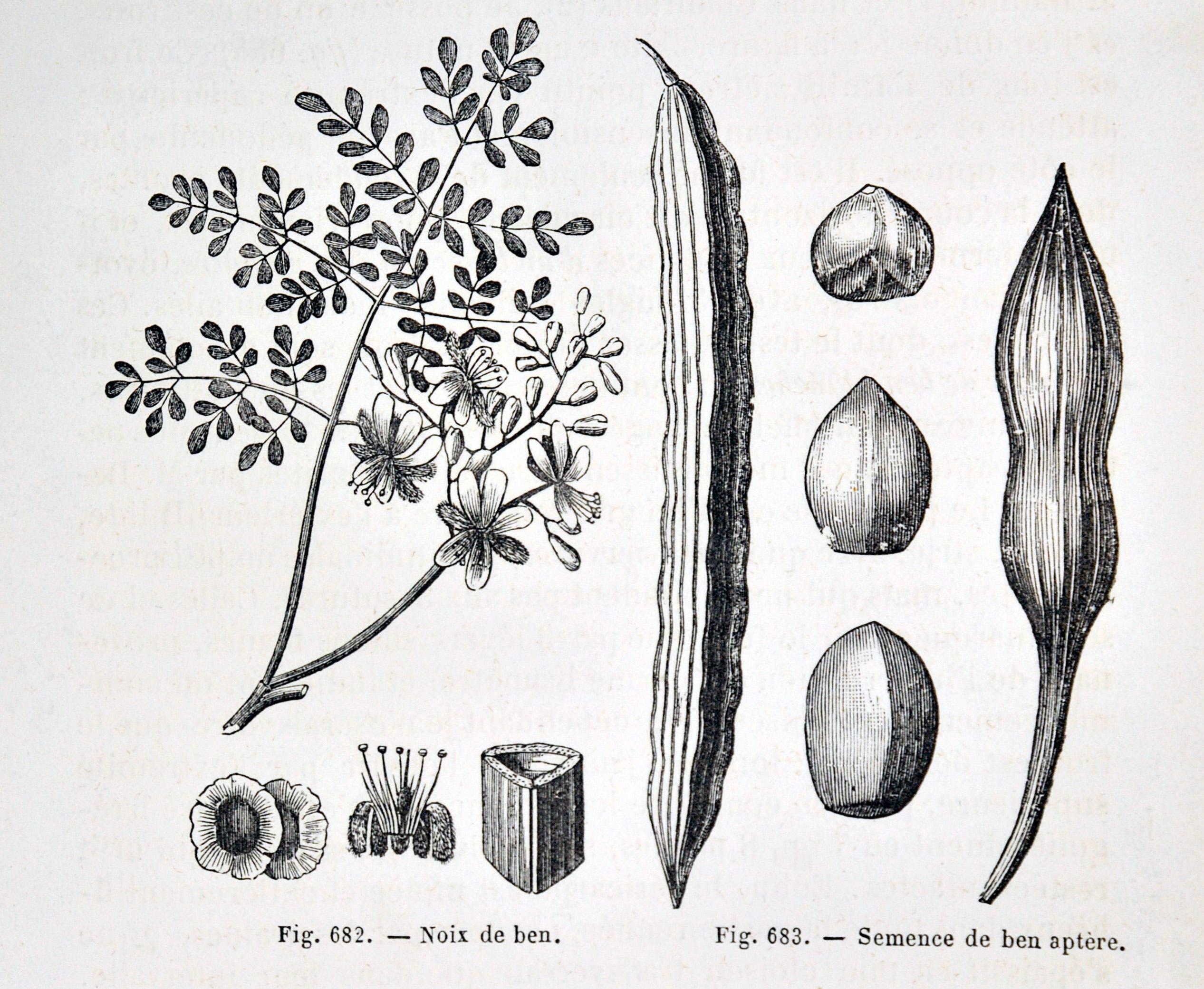les ouvrages de botanique du xix me si cle des marqueurs historiques pour la discipline. Black Bedroom Furniture Sets. Home Design Ideas