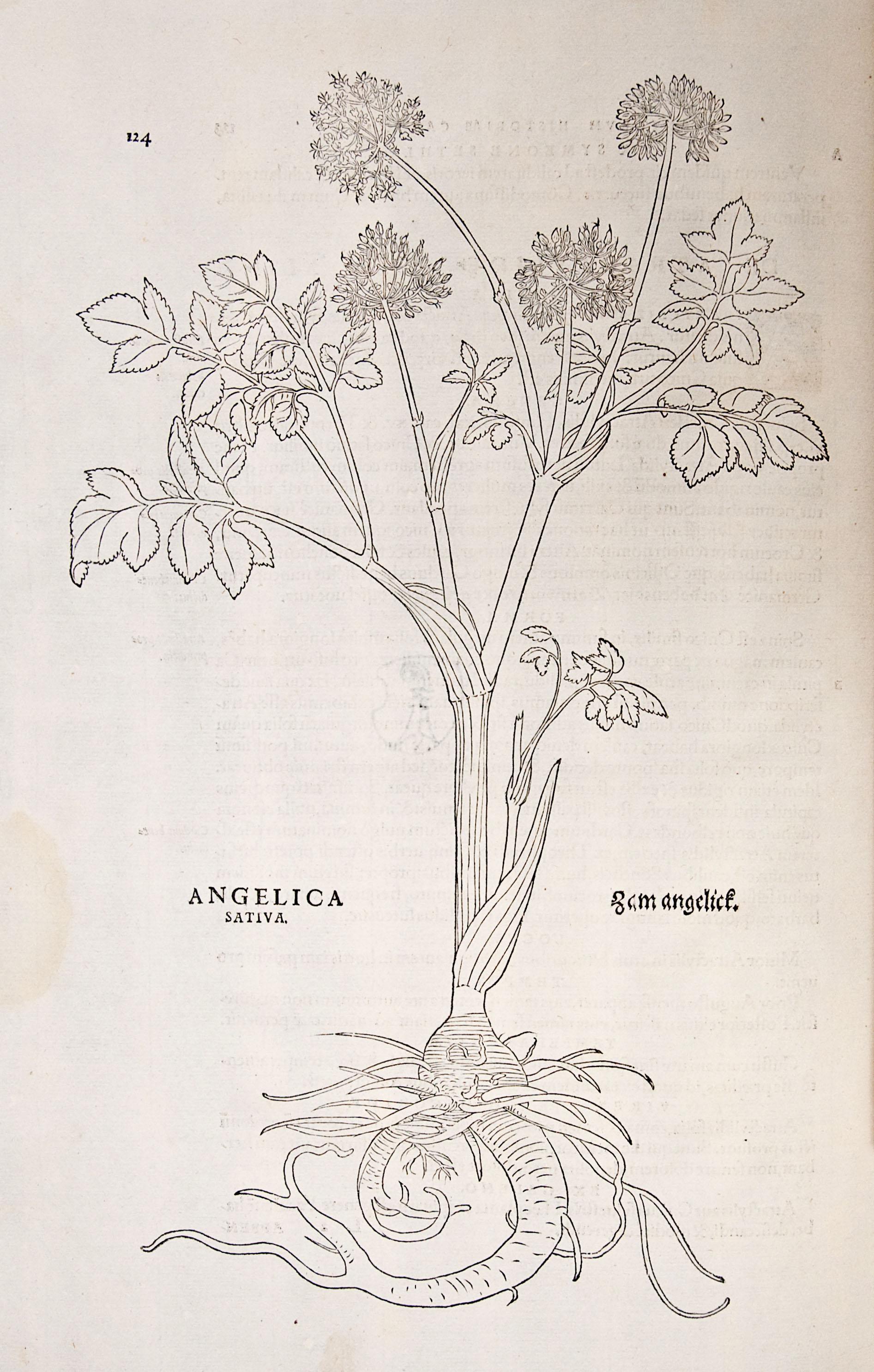 angelique (2)
