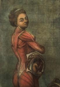 Brachet J.L (12)