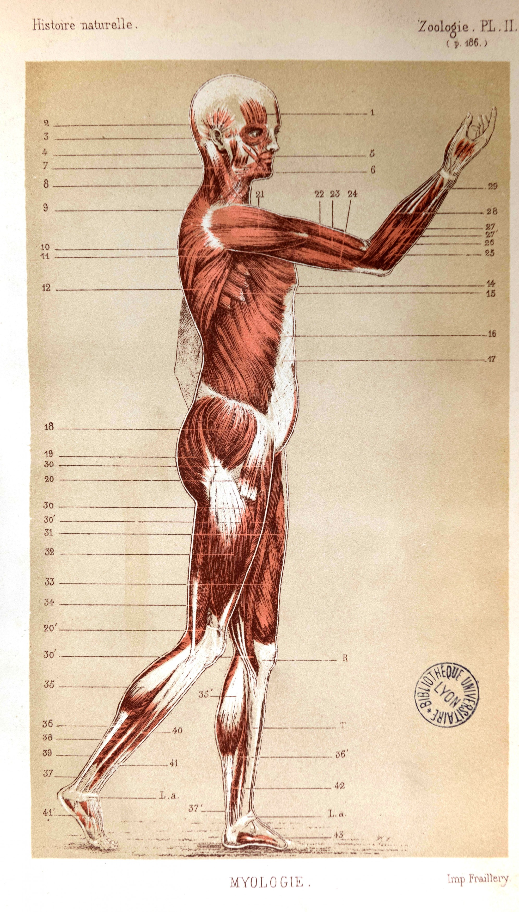 Paléontologie (12)