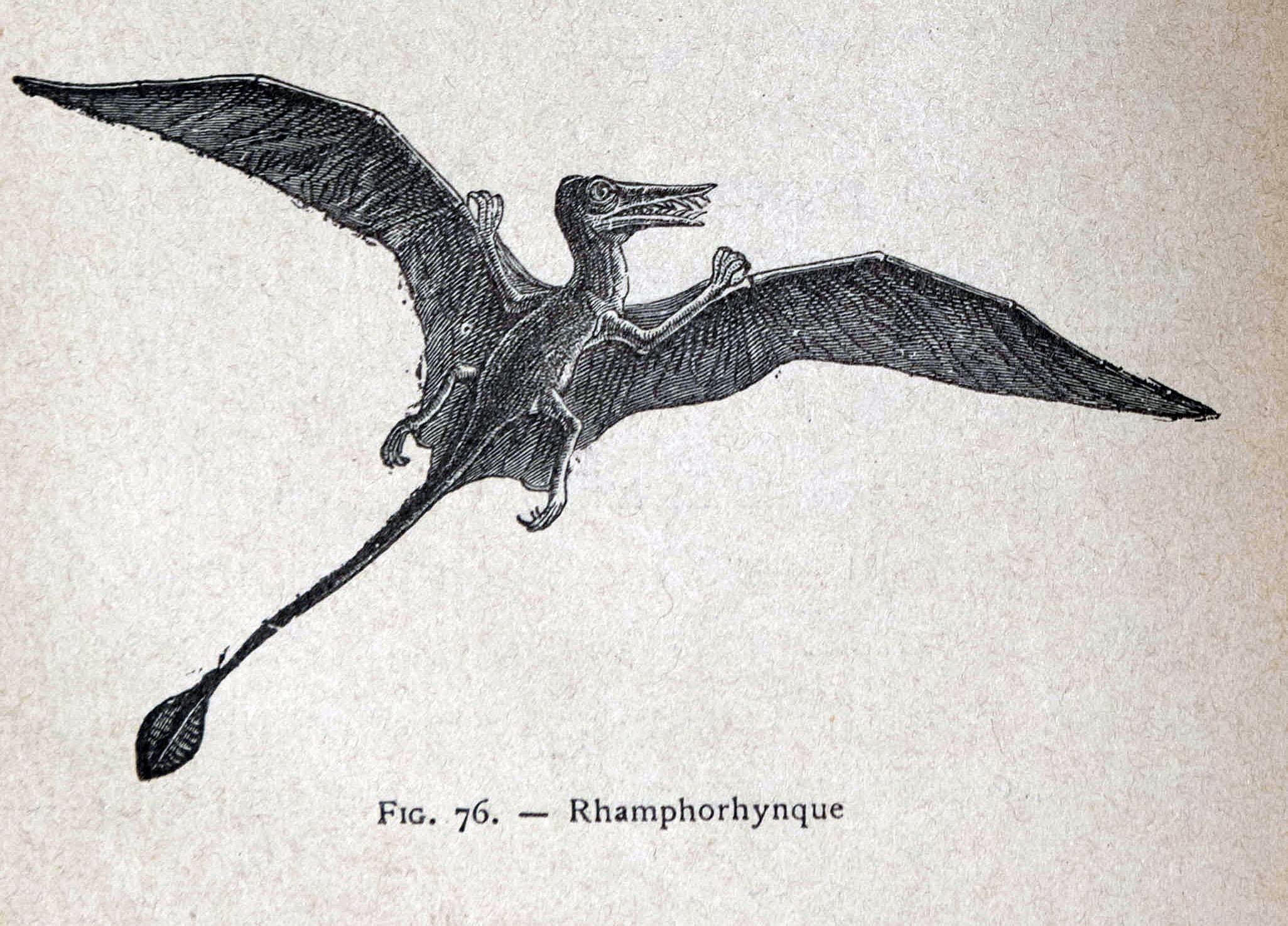 Paléontologie (18)