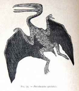 Paléontologie (19)