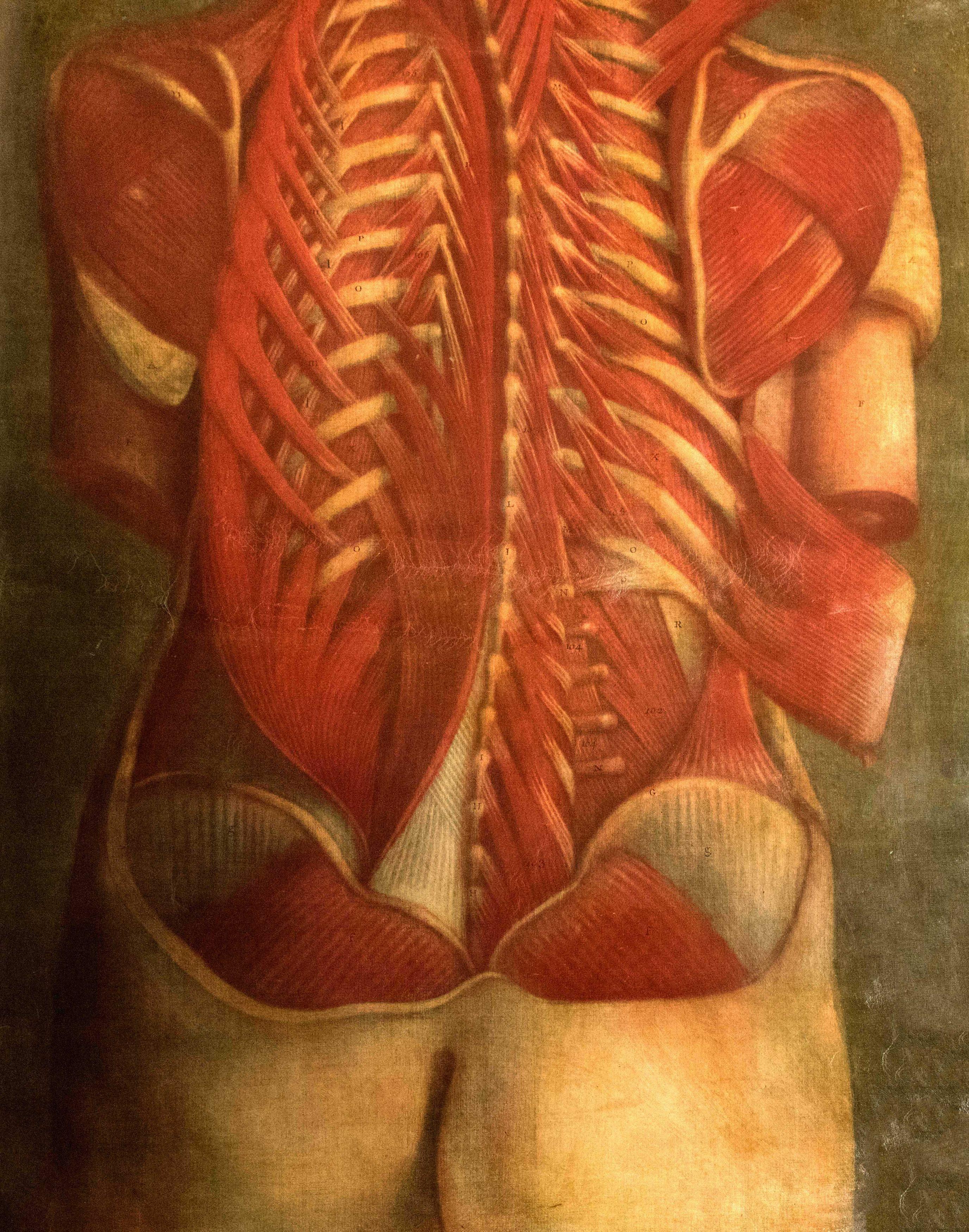 Planches Anatomie (3)