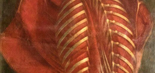 Planches Anatomie (7)
