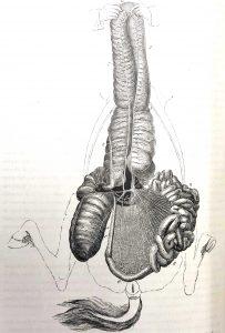Planches anatomie (11)