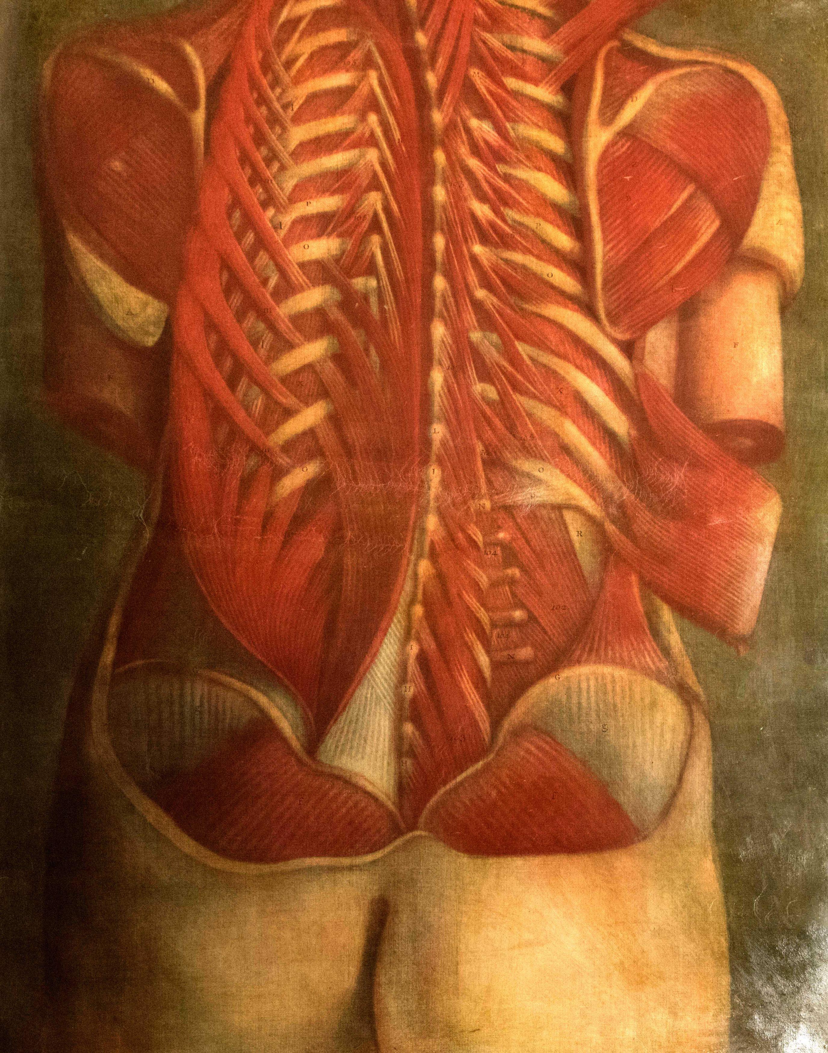 Planches anatomie (2)