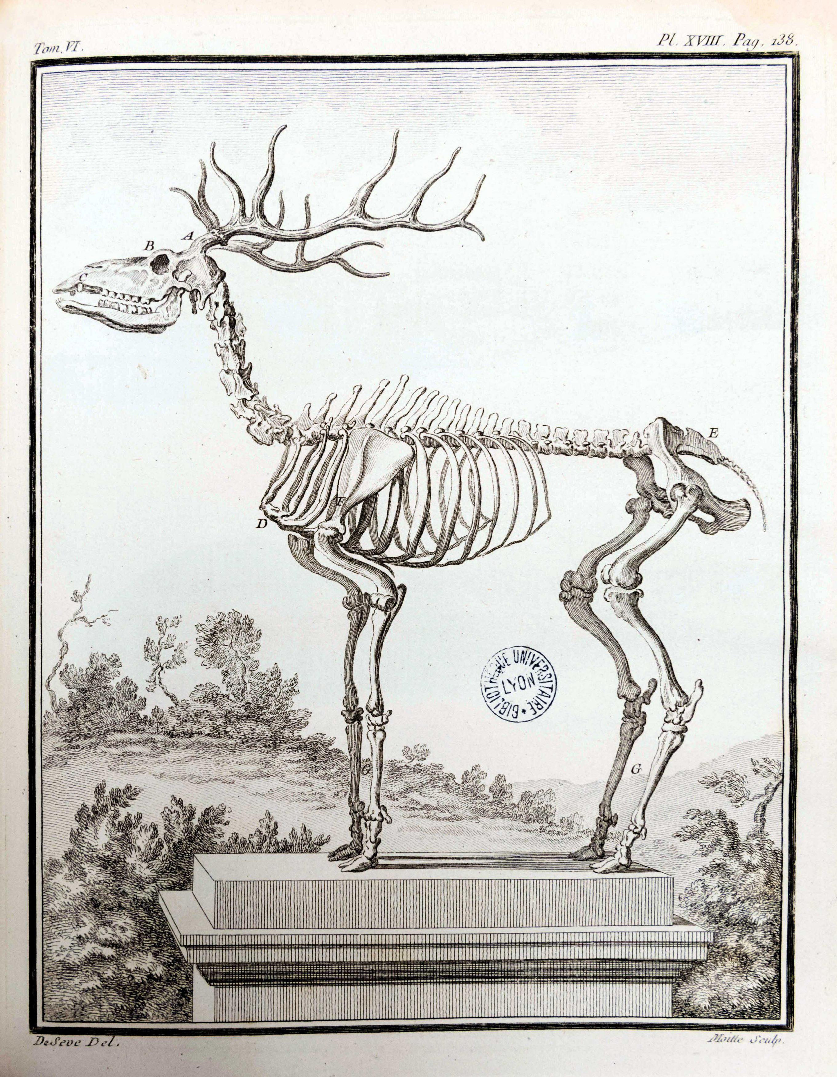 Planches anatomie (21)