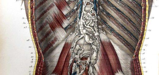 Traité d'anatomie ancien (11)