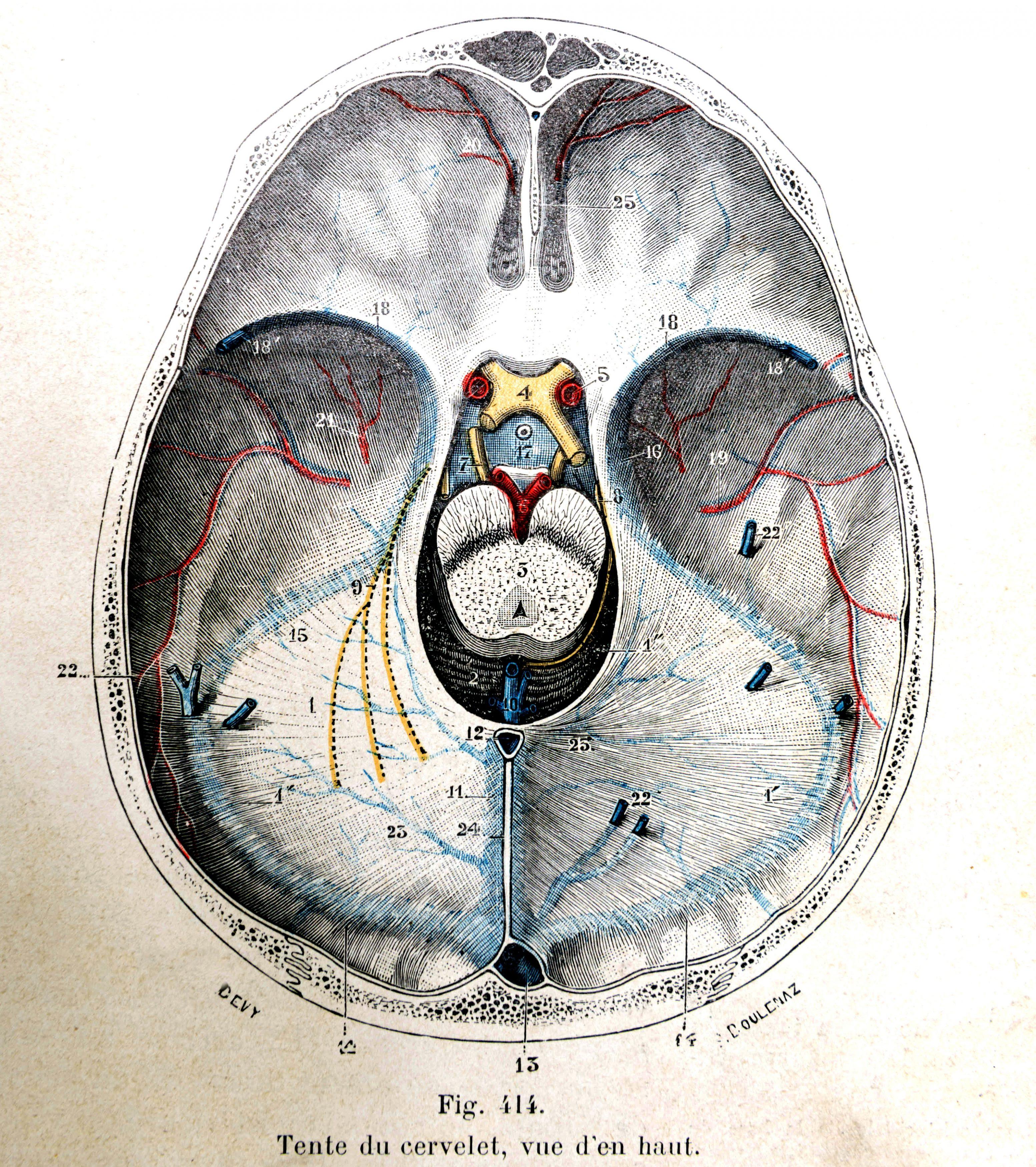 Traité d'anatomie ancien (15)