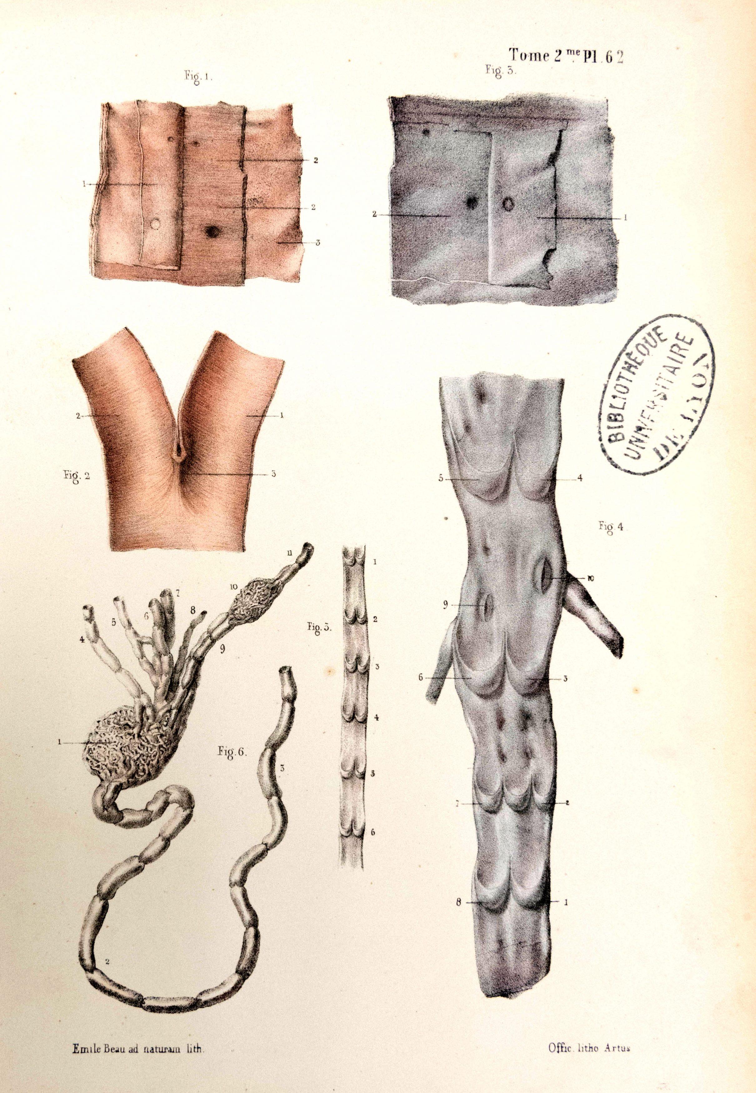 Traité d'anatomie ancien (18)