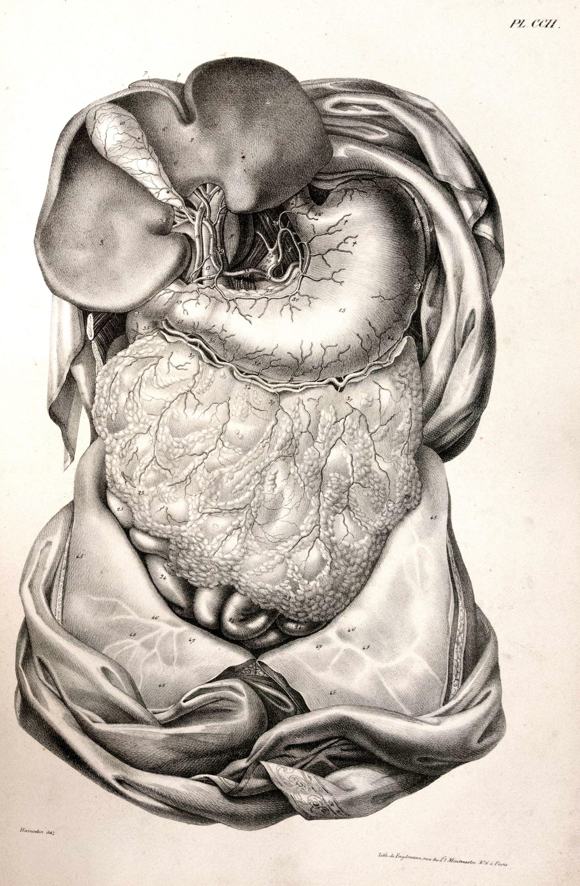 Traité d'anatomie ancien (19)