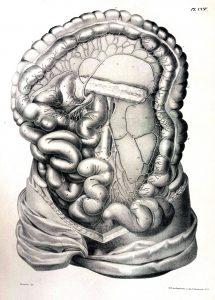 Traité d'anatomie ancien (20)