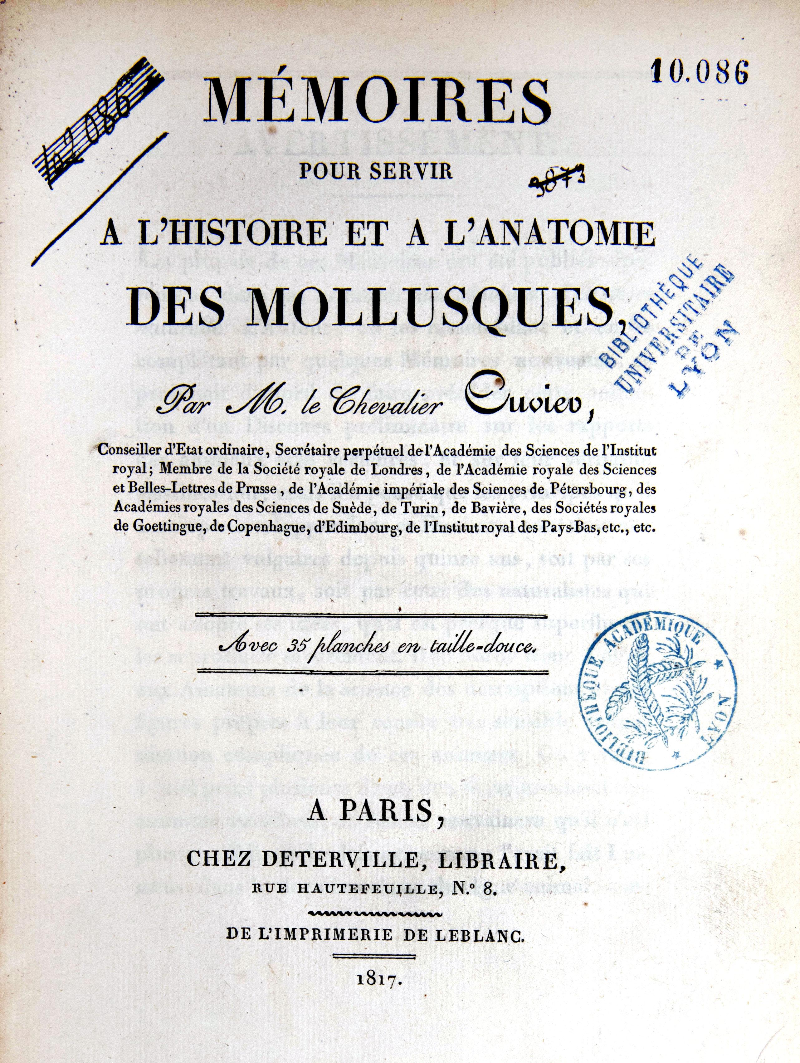 Mollusques (1)