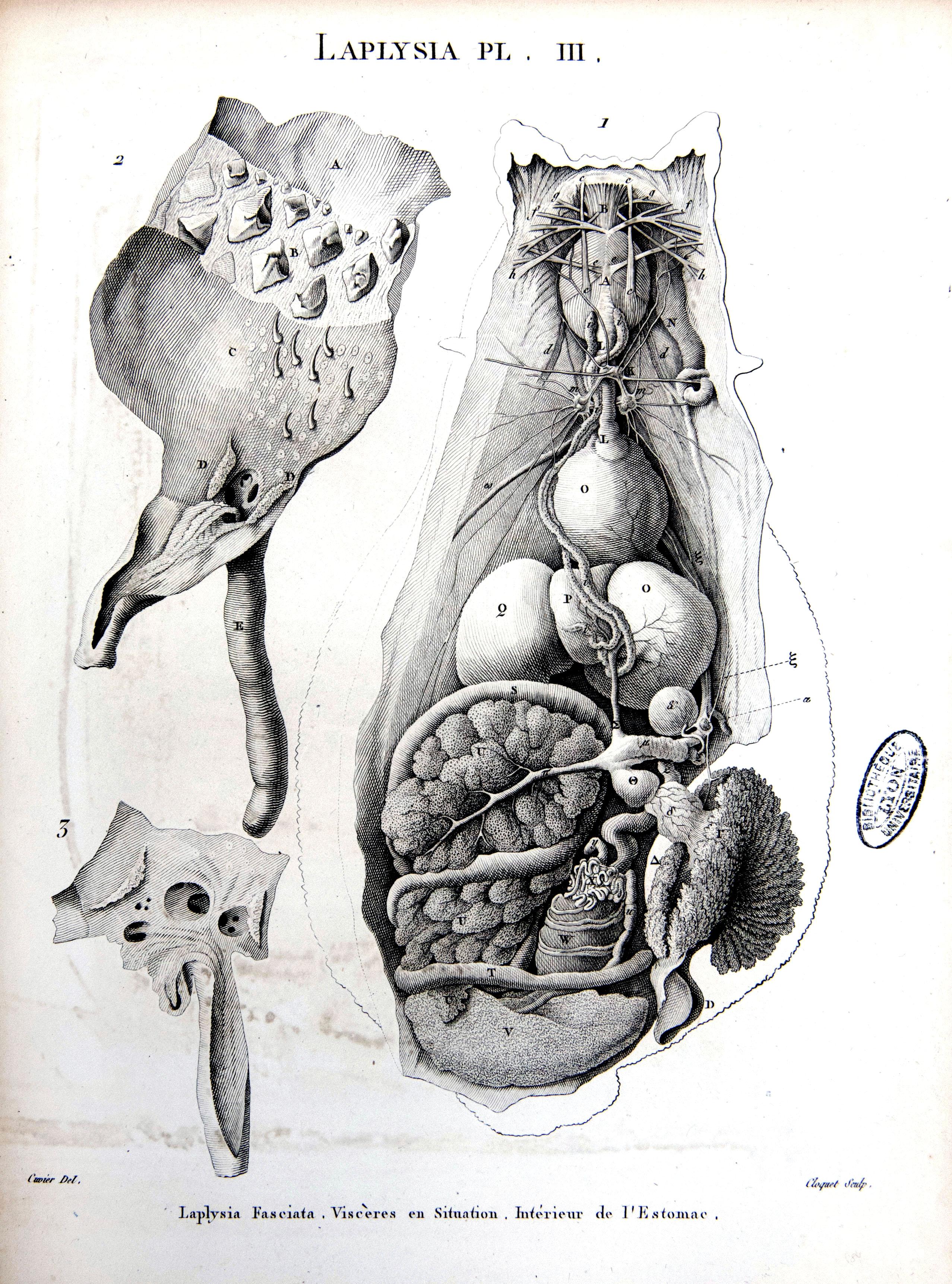 Mollusques (5)