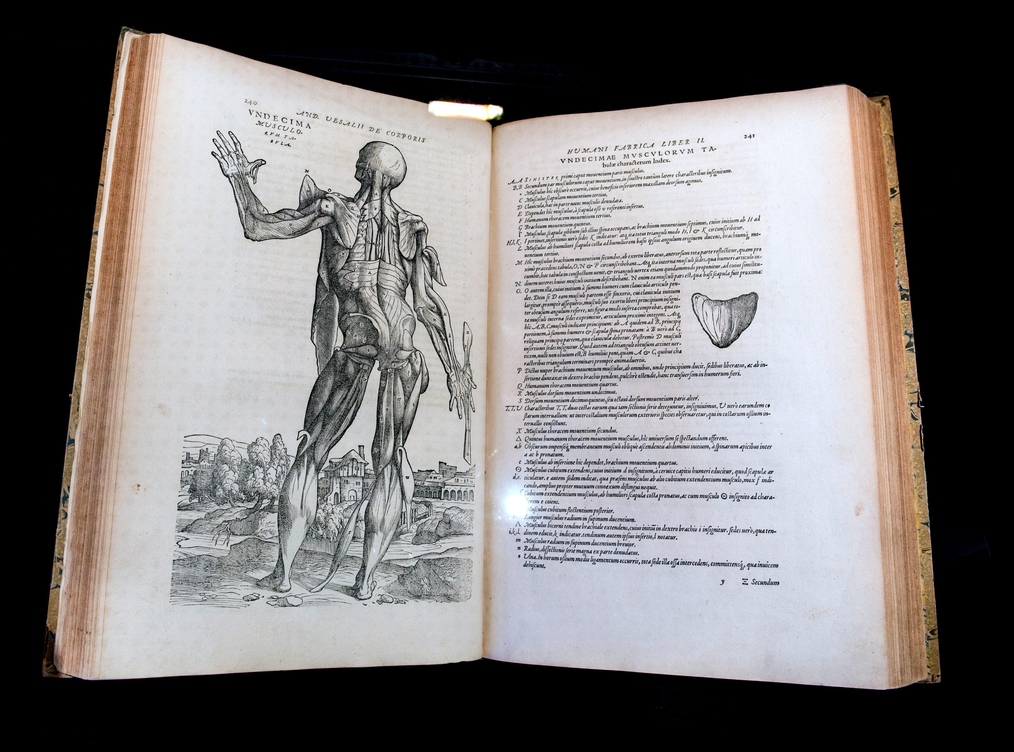 2017 Exposition L'anatomie de Vésale (30)