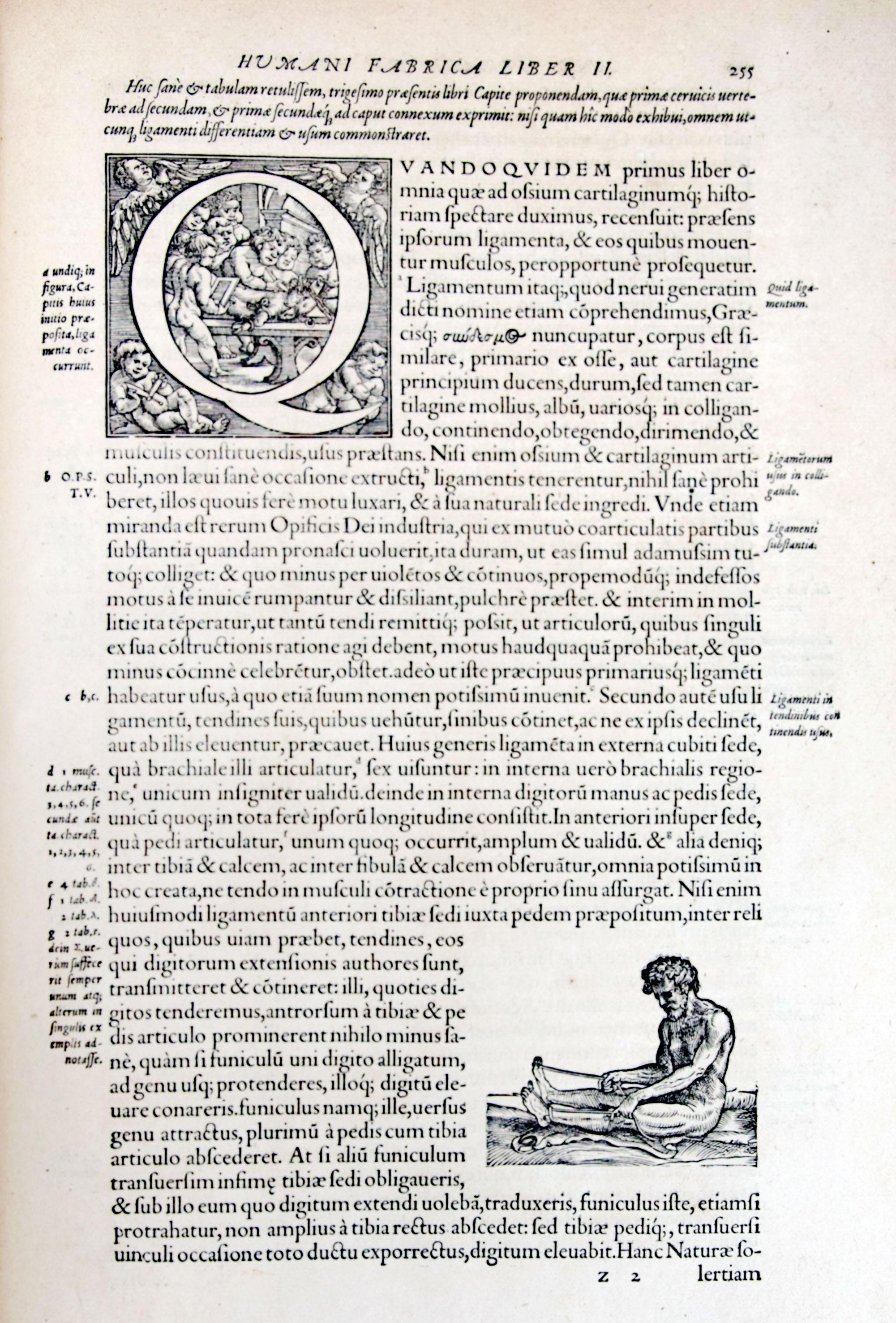 Pages Vésale (4)