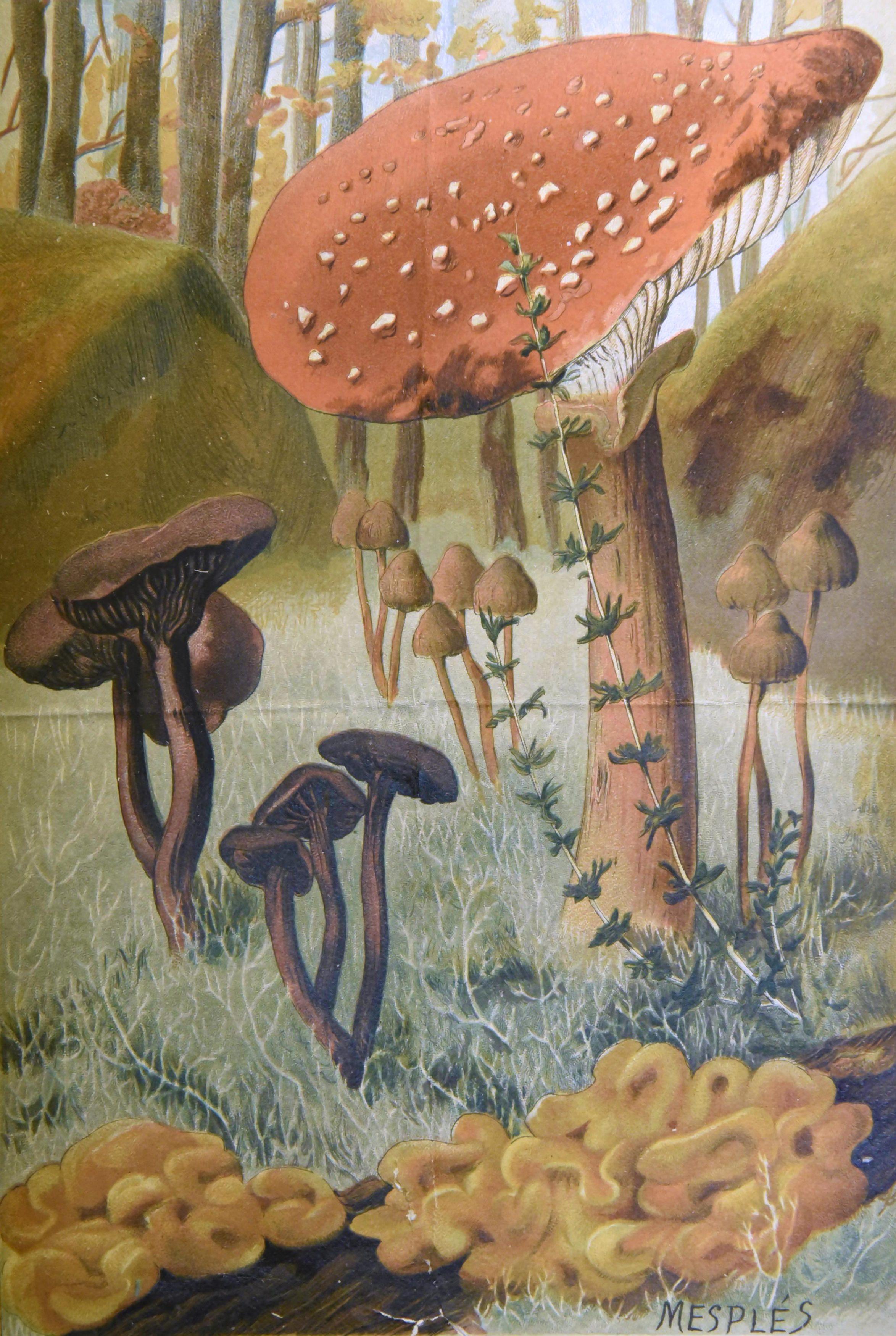 Bonnier - Les plantes 14