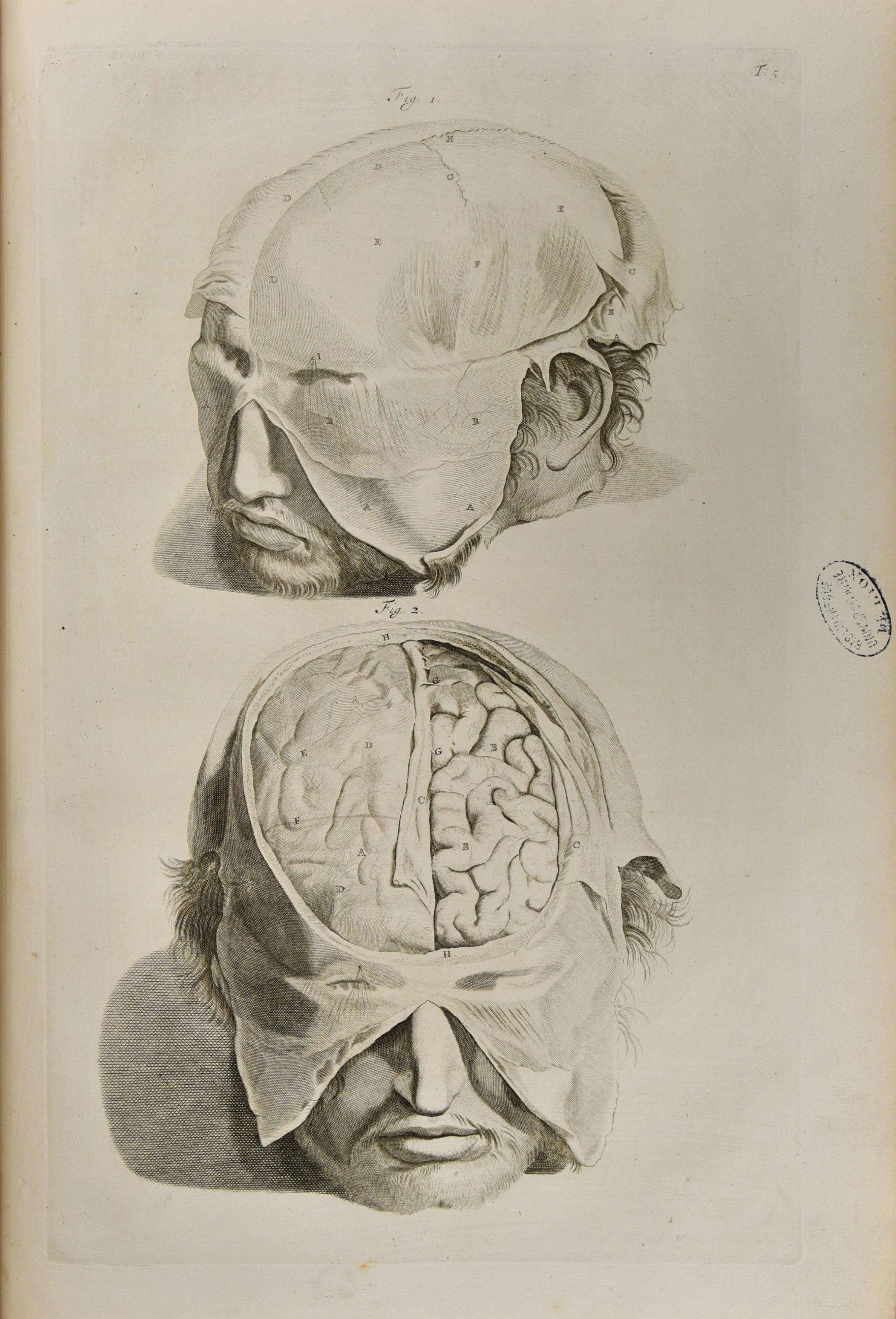 Corporum humanorum - 14