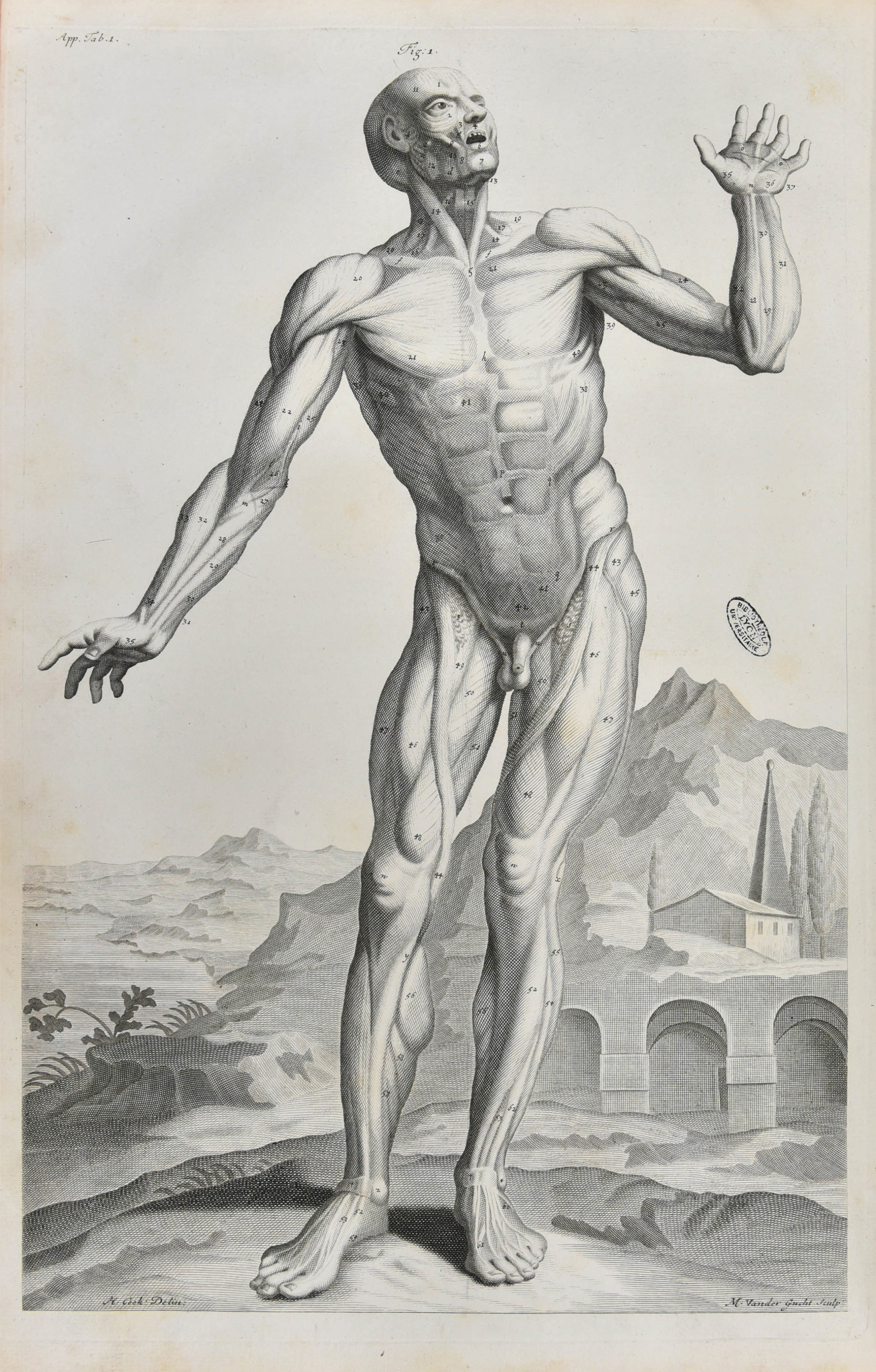 Corporum humanorum - 32