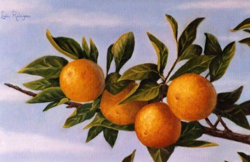 """Rama de naranjo"", de Lucía Rodriguez Vicario"