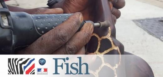 fish alicia