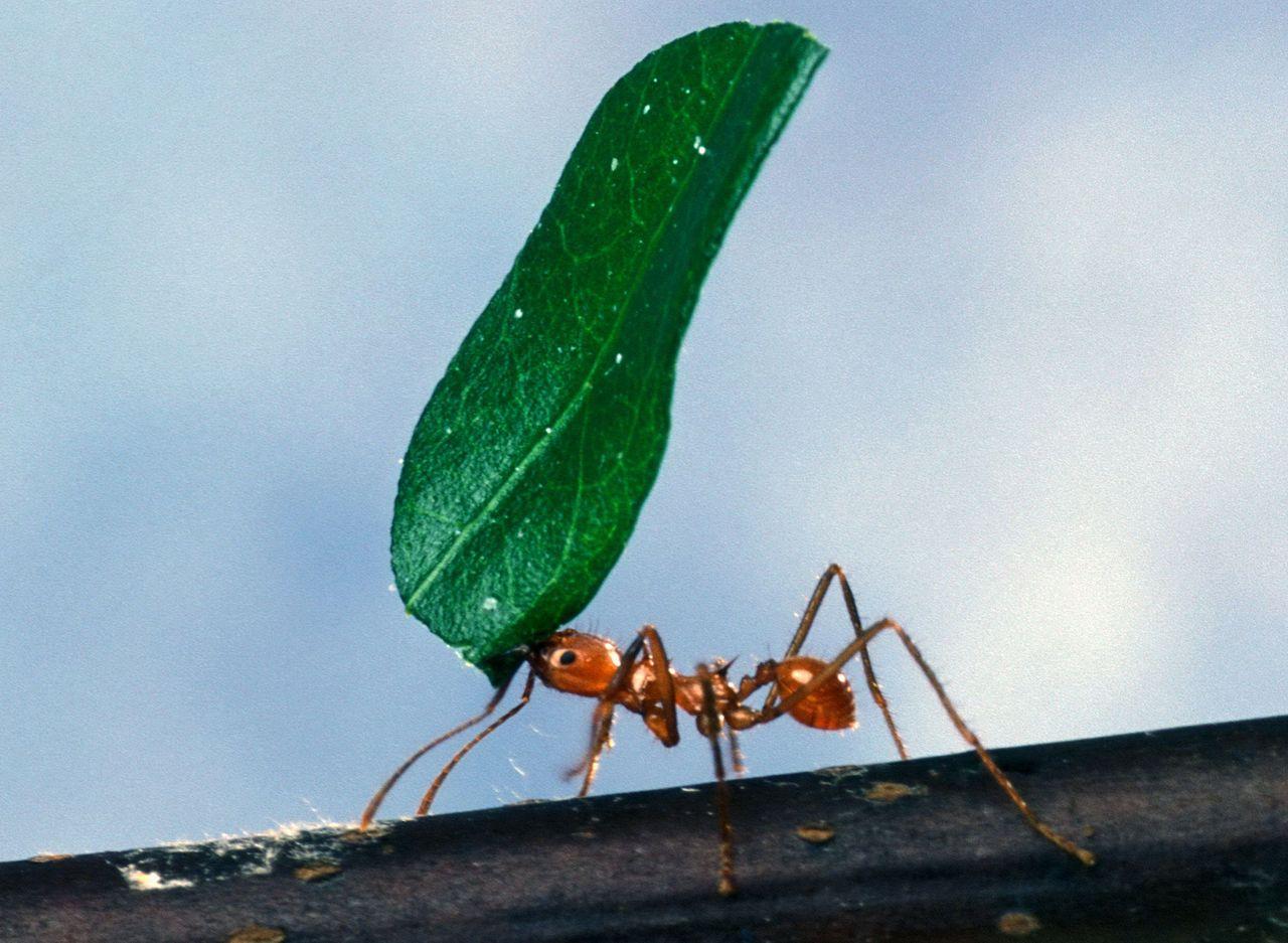 Ameisen2