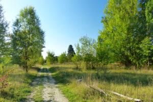 friche kodak nature 2050