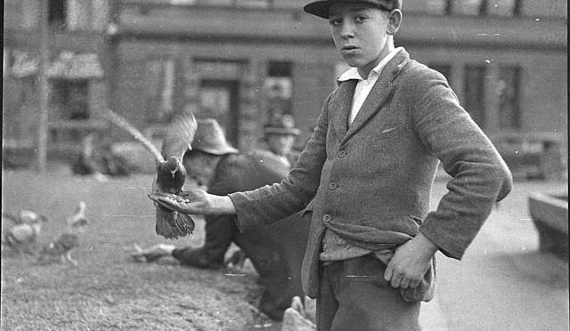 MERCREDI – La semaine de l'Open Access Week : L'élevage des pigeons et les anciens pigeonniers dans le village de Limans