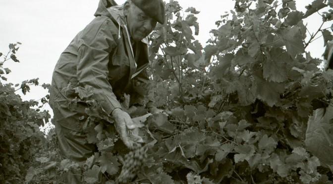 Mise en ligne du fonds «La langue et la vigne dans le Gaillacois» aux Archives départementales du Tarn