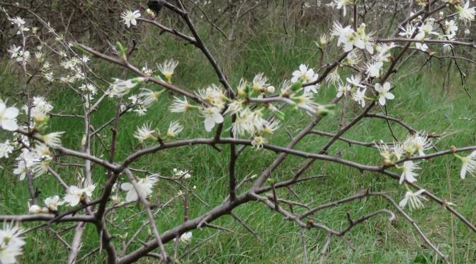 Recette du mois : de l'usage des plantes médicinales dans les Alpes-de-Haute-Provence
