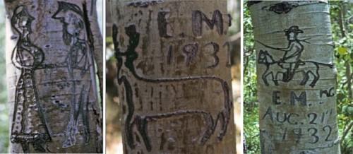 arbre copie