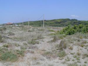Fig. 3 - Pratelli terofitici e macchia mediterranea presso Lavinio (foto A.T.R Acosta)