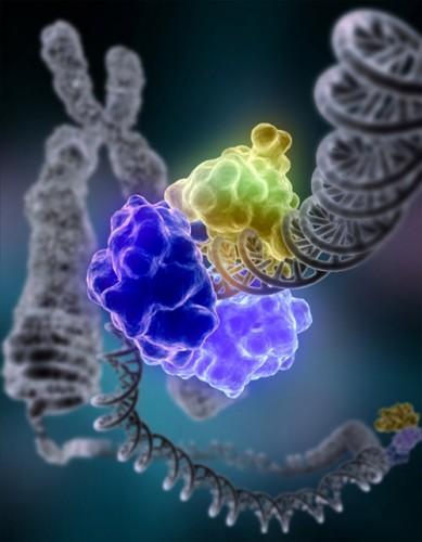 CC Wikimedia Commons, DNA Repair, Tom Ellenberger, Washington University School of Medicine in St. Louis