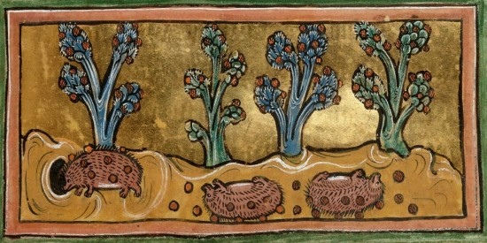Hedgehogs rolling to pick up food, from a 13th-century English bestiary: British Library, Royal 12 F XIII, fol. 45r.