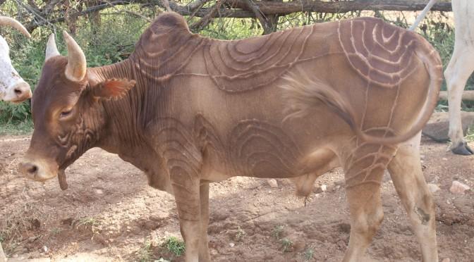 Conférence / Lecture: Archéozoologie de l'élevage / Archaeozoology of herding