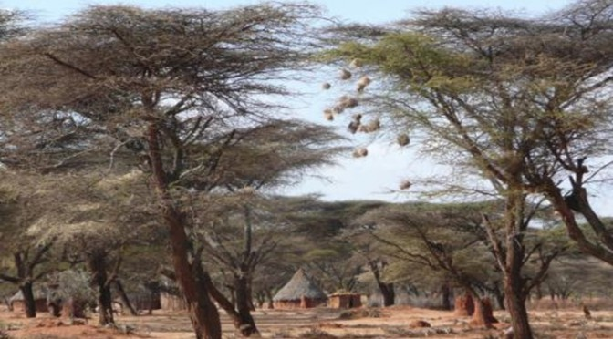 Potential of further UNESCO-Biosphere Reserves in Ethiopia