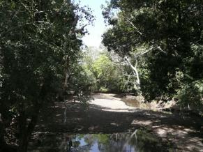 Fig. 6. Riverine forest at Kulfo River,  Nechsar National Park (© R. Moreaux)