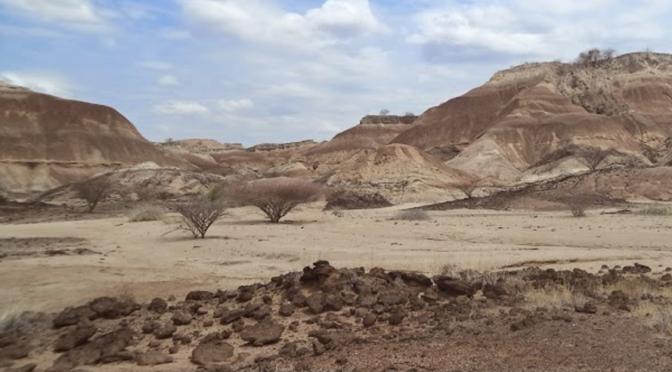 Joint Seminar : Vertebrate faunas from the Plio-Pleistocene in the Lower Omo Valley
