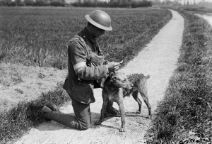 un-chien-messager-de-l-armee-britannique-en-1918-photo-dr