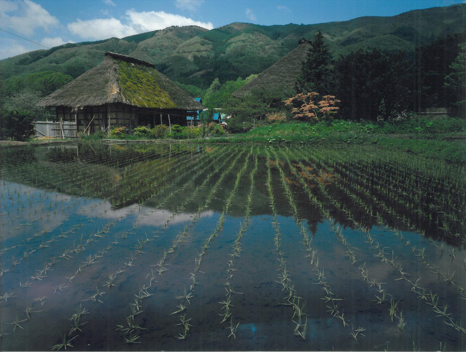 maison-rizière_2