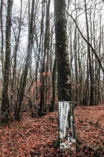 Arbor-Essence. (cc) Tristan Leyri (25/01/14)