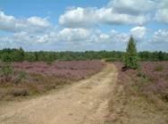 Die Drover Heide zählt zu den bedeutendsten Naturschutzgebieten im Kreis Düren.
