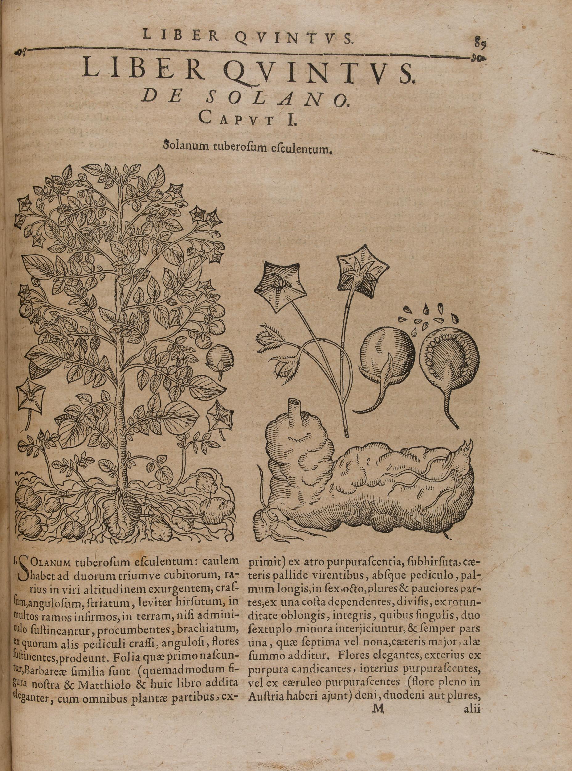Le Solanum tuberosum dans l'ouvrage de Bauhini, 1671 (154 755)
