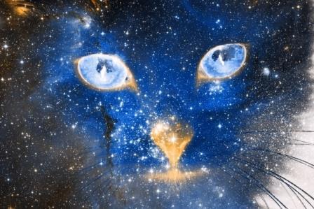 Projection cosmologique. Cosmic Kitten, par Nicolas Raymond (source : http://freestock.ca/)