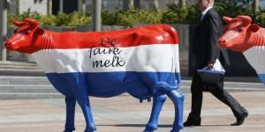 """Steak holder (crédits : """"vache hollandaise à Bruxelles"""", Reuters, via LaTribune.fr)"""